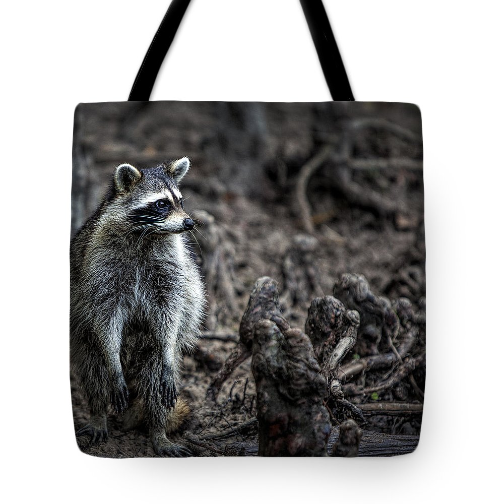 Raccoon Tote Bag featuring the photograph Louisiana Raccoon by Diana Powell