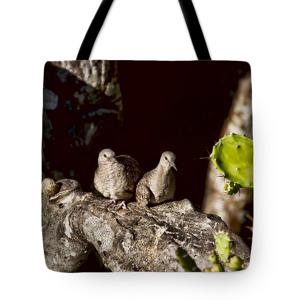 Doves Tote Bag featuring the photograph Love Doves by Peggy Collins