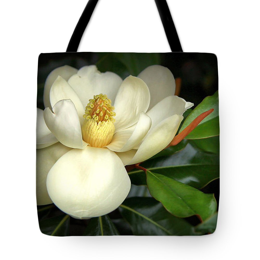 Magnolia Tote Bag featuring the photograph Lovely Magnolia by Sharon Horn