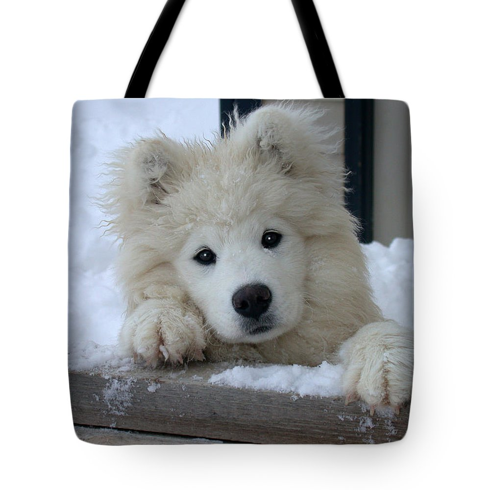 Samoyed Tote Bag featuring the photograph Loving The Snow by Shane Bechler