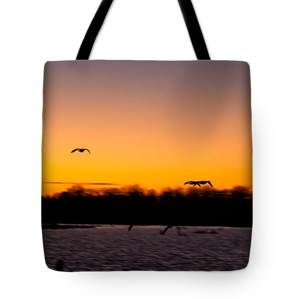 Goose Tote Bag featuring the photograph Low Flyby by Thomas Sellberg
