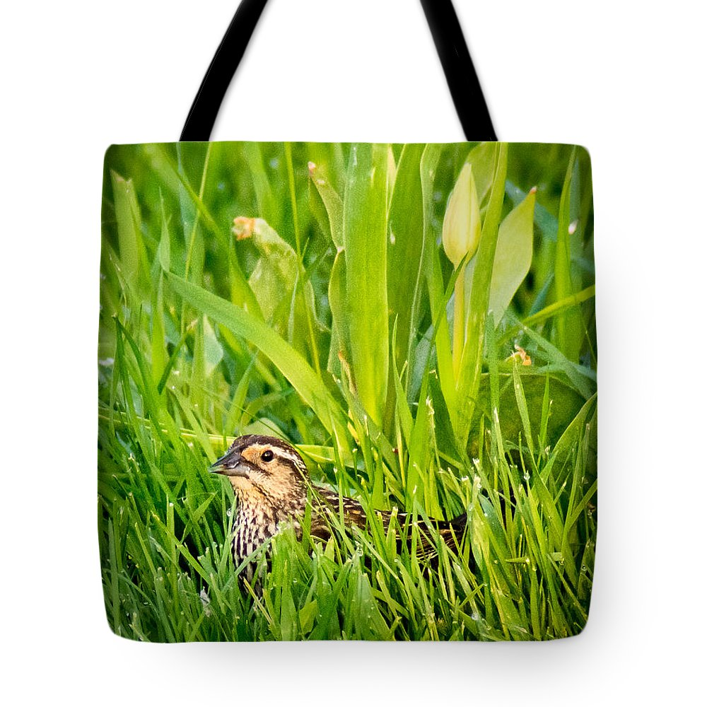 Bird Tote Bag featuring the photograph Low Profile by Bill Pevlor