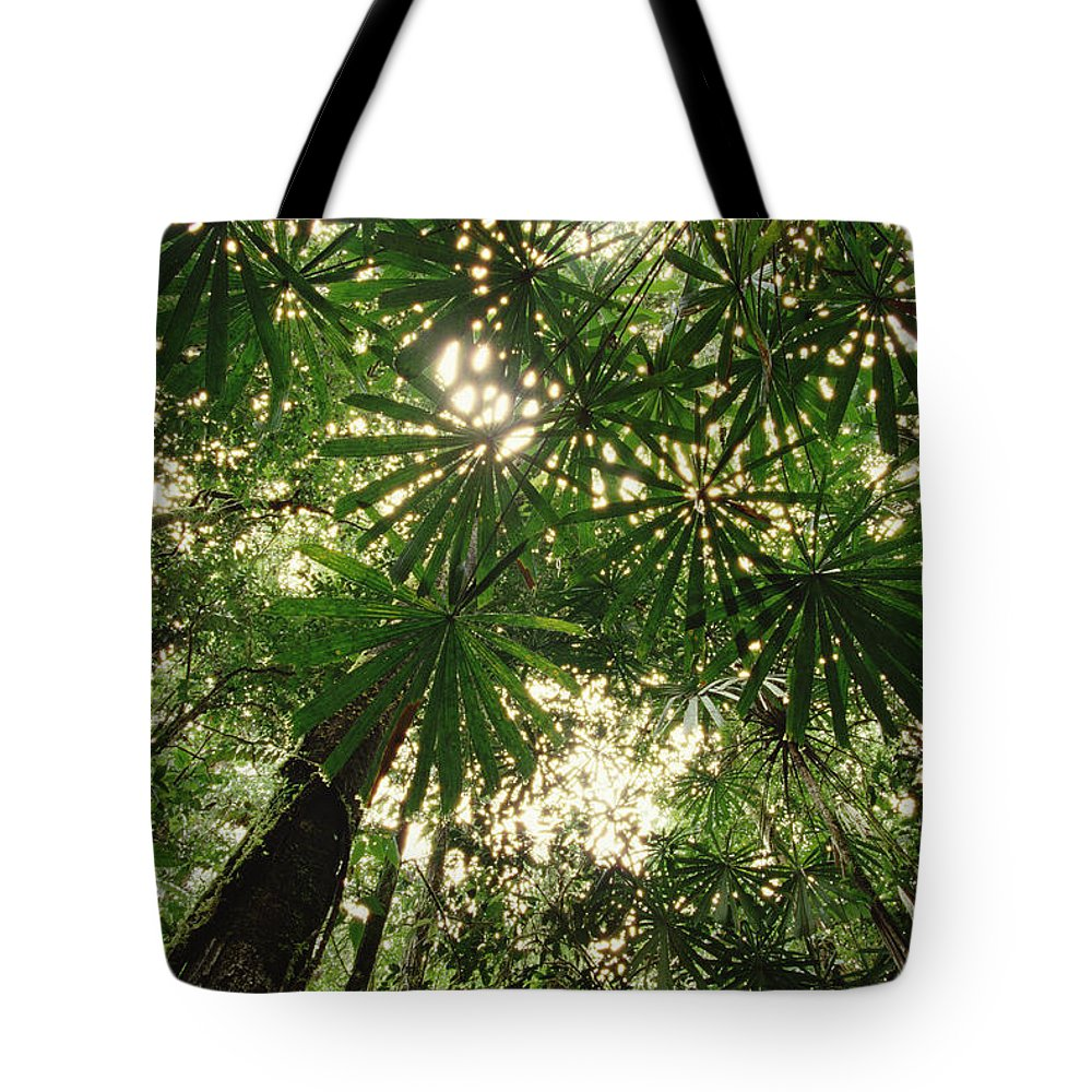 Canopy Tote Bag featuring the photograph Lowland Tropical Rainforest Fan Palms by Gerry Ellis