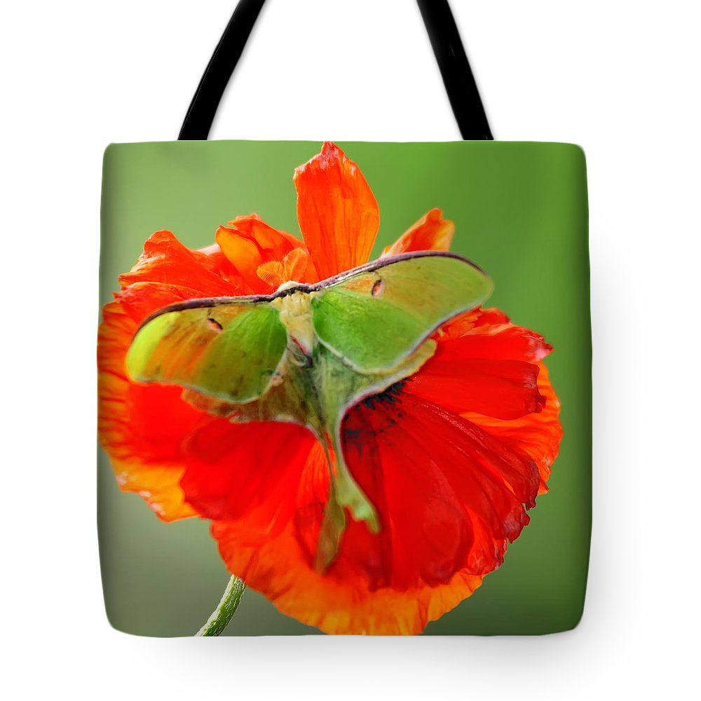 Luna Moth Tote Bag featuring the photograph Luna Moth On Poppy Square Format by Randall Branham