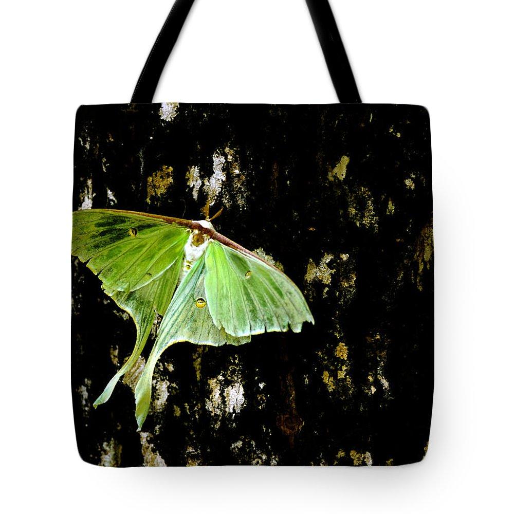 Luna Moth Tote Bag featuring the photograph Luna Moth On Tree by Randall Branham