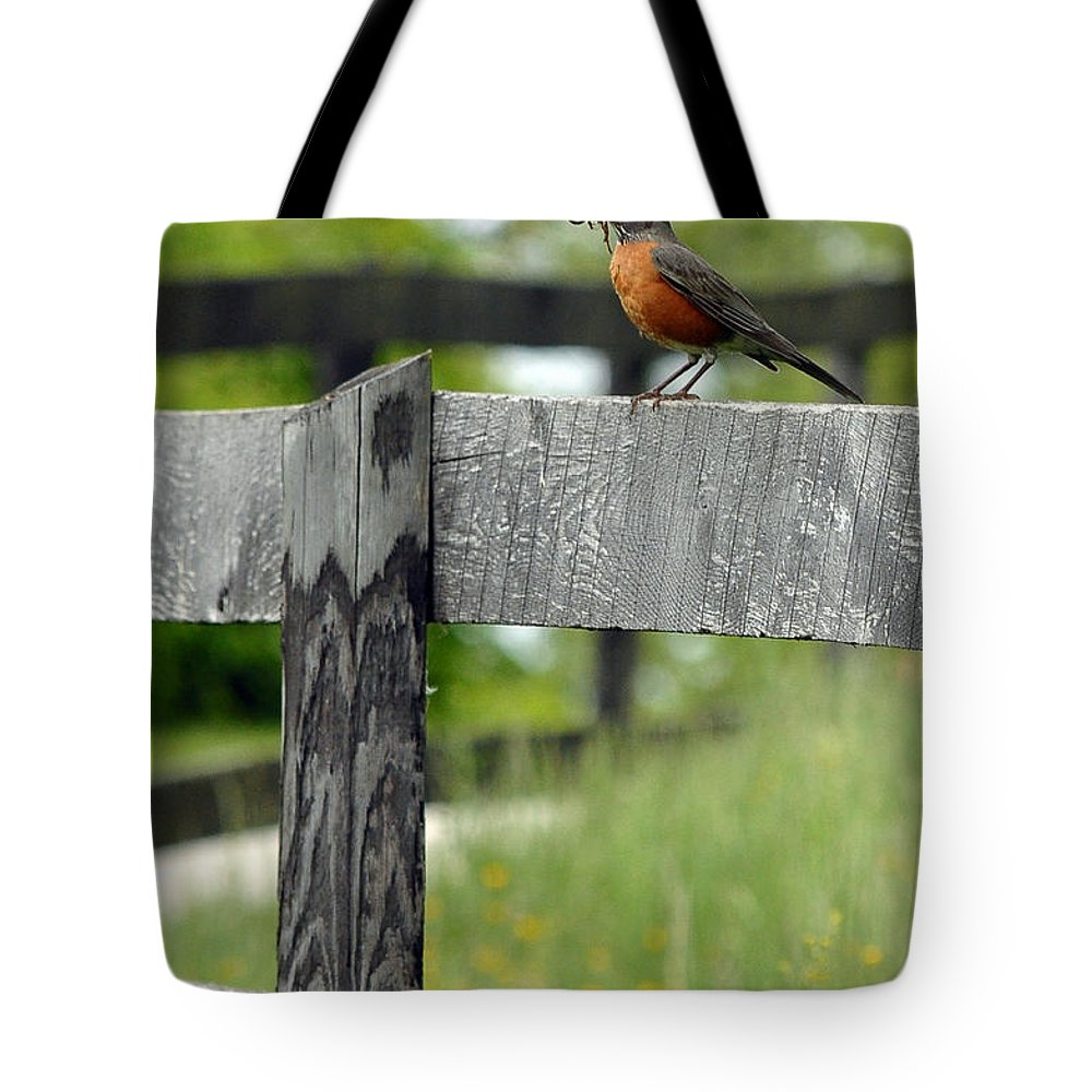 Lunch Tote Bag featuring the photograph Lunch by Lisa Phillips