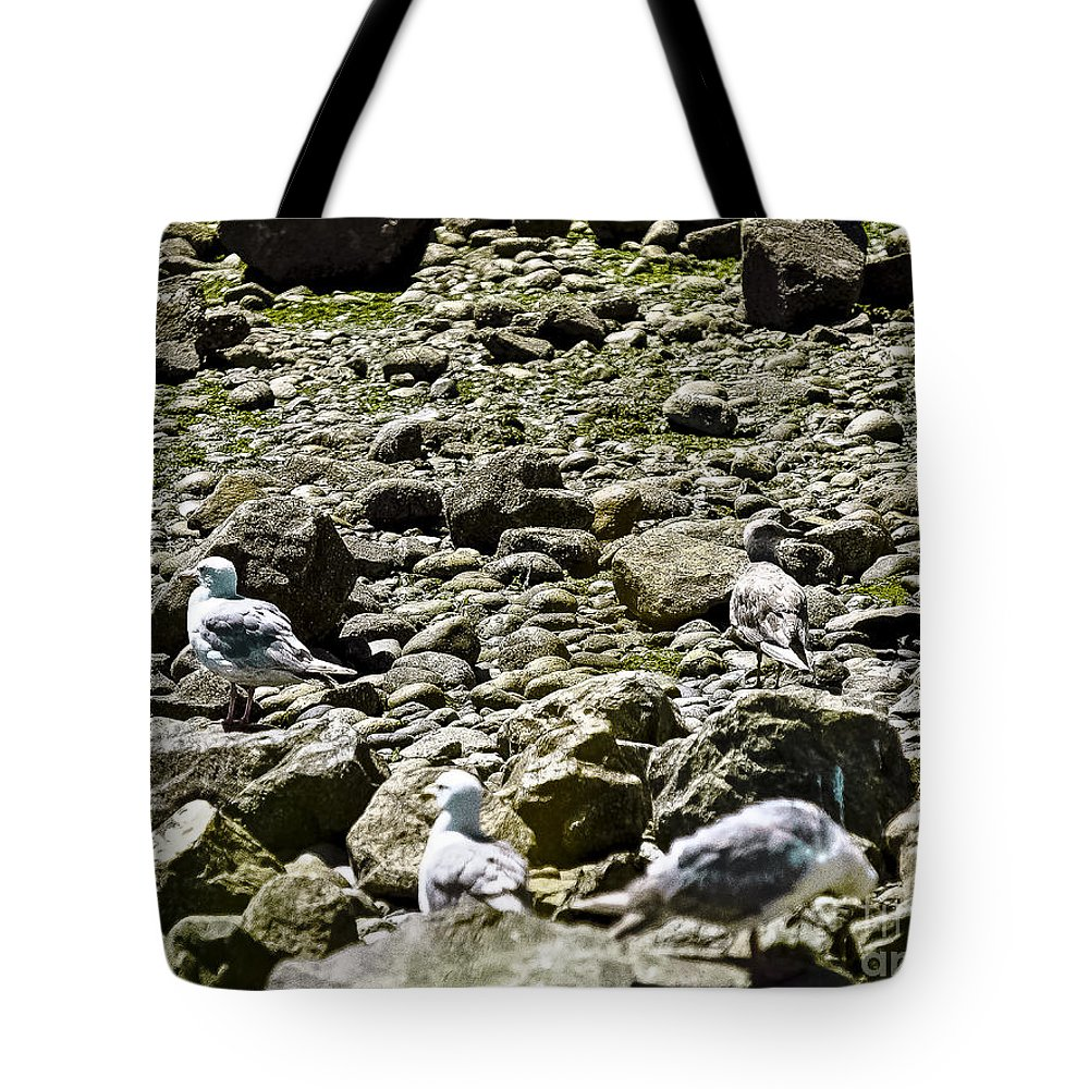 Beach Tote Bag featuring the photograph Lunch With The Gulls by David Fabian