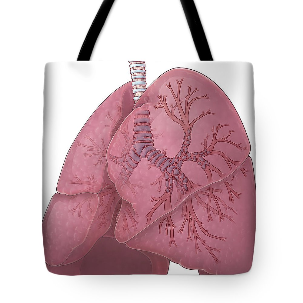 Illustration Tote Bag featuring the photograph Lungs And Bronchi by Evan Oto