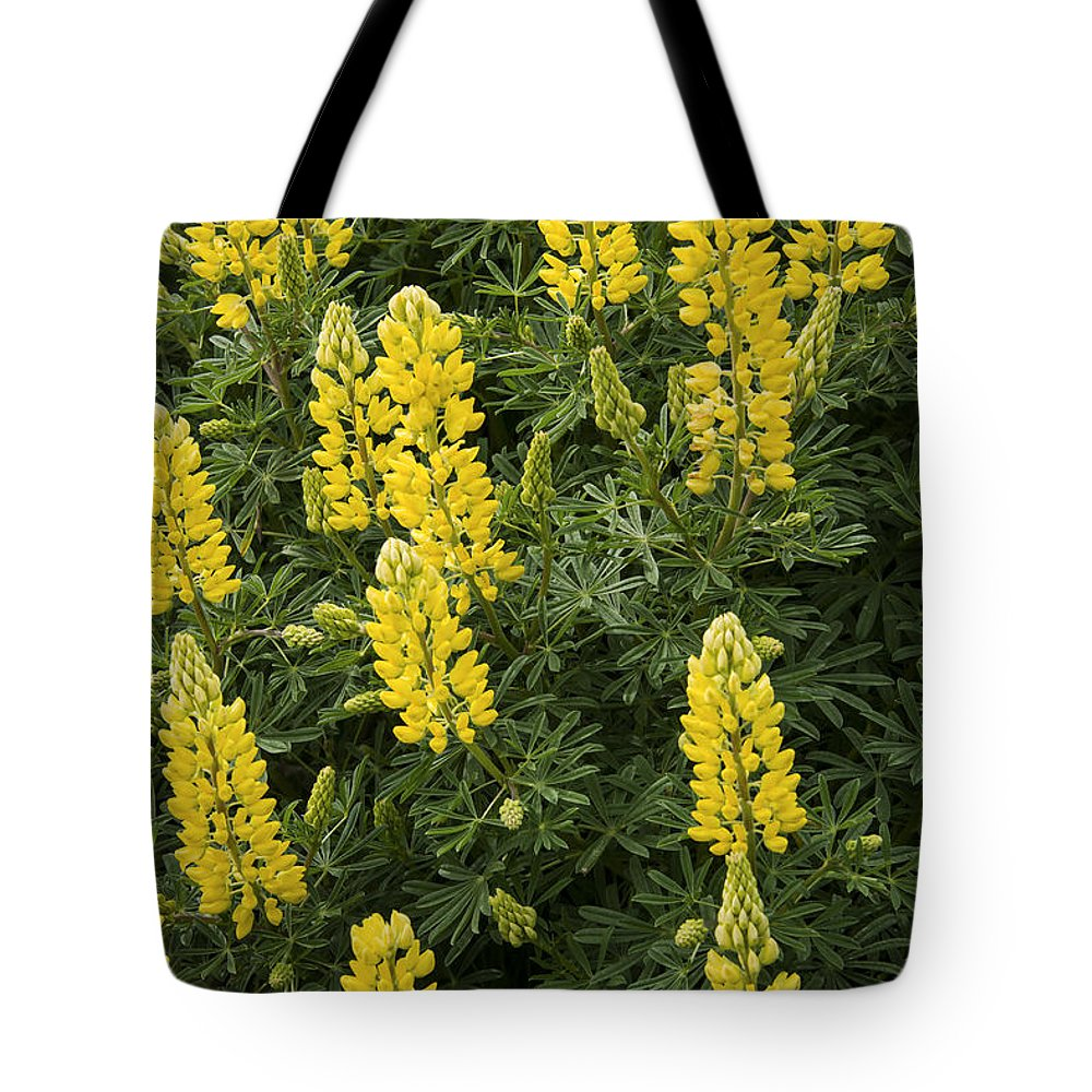 Lake Te Anau New Zealand Yellow Lupin Lupins Flower Flowers Plant Plants Bloom Blooms Tote Bag featuring the photograph Lupin Blooms by Bob Phillips
