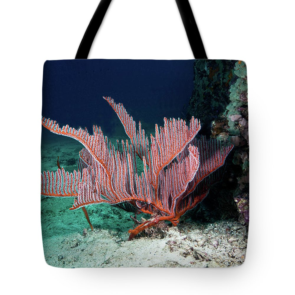 Underwater Tote Bag featuring the photograph Lyre Gorgonian, Harp Coral by Gerard Soury