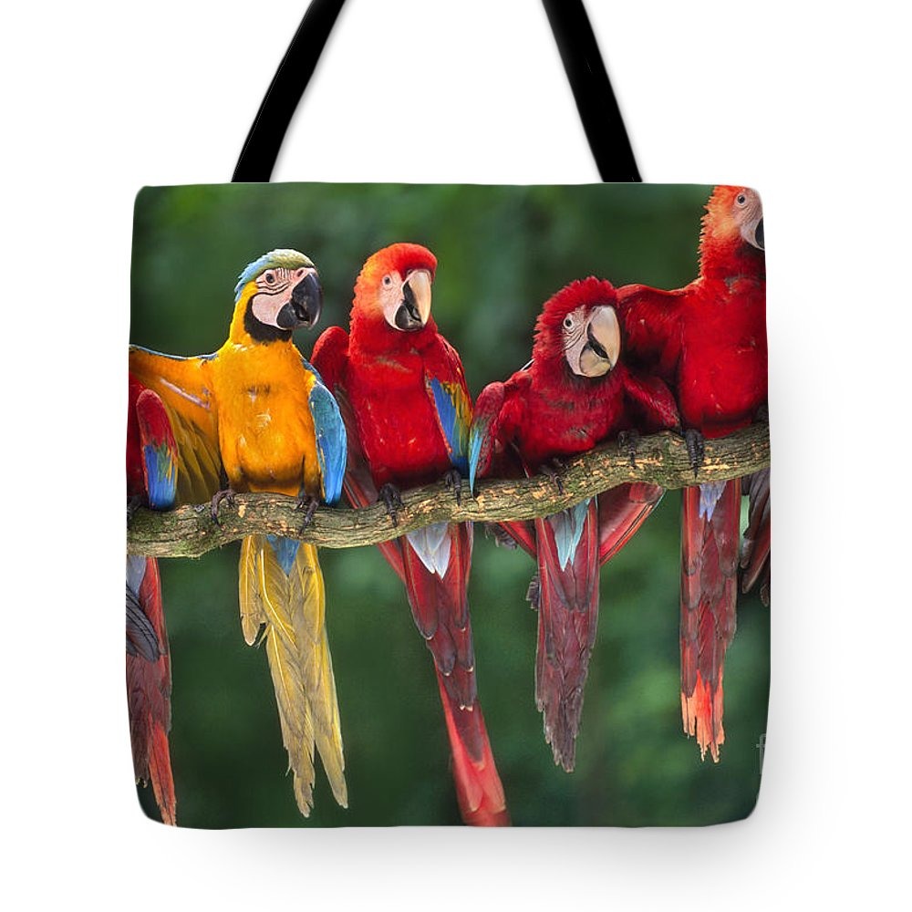 Bizarre Tote Bag featuring the photograph Macaws by Frans Lanting MINT Images