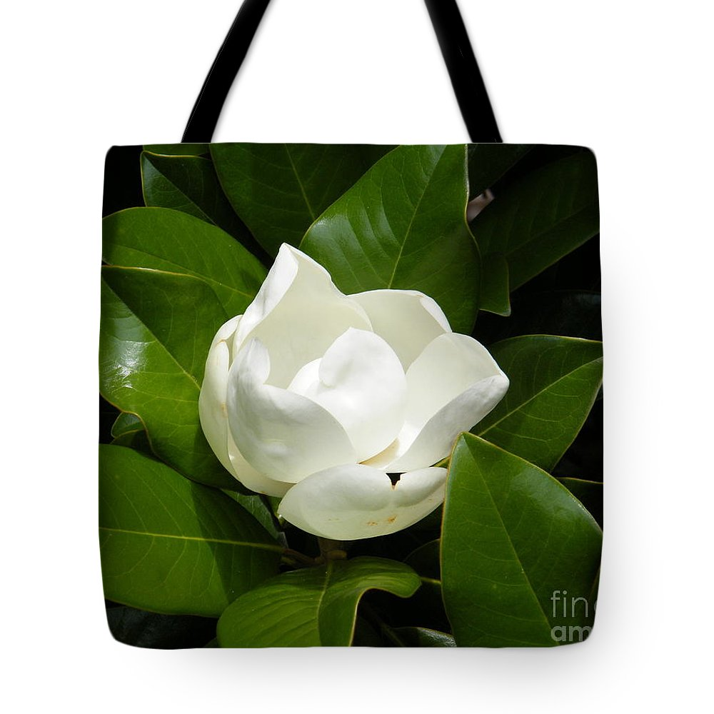 Magnolia Blossom Tote Bag featuring the photograph Magnolia Blossom by Cheryl Hardt Art