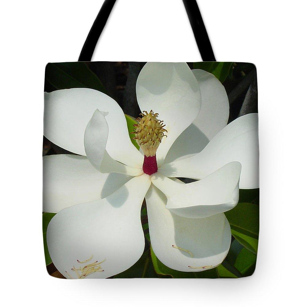 Magnolia Grandiflora Tote Bag featuring the photograph Magnolia II by Suzanne Gaff