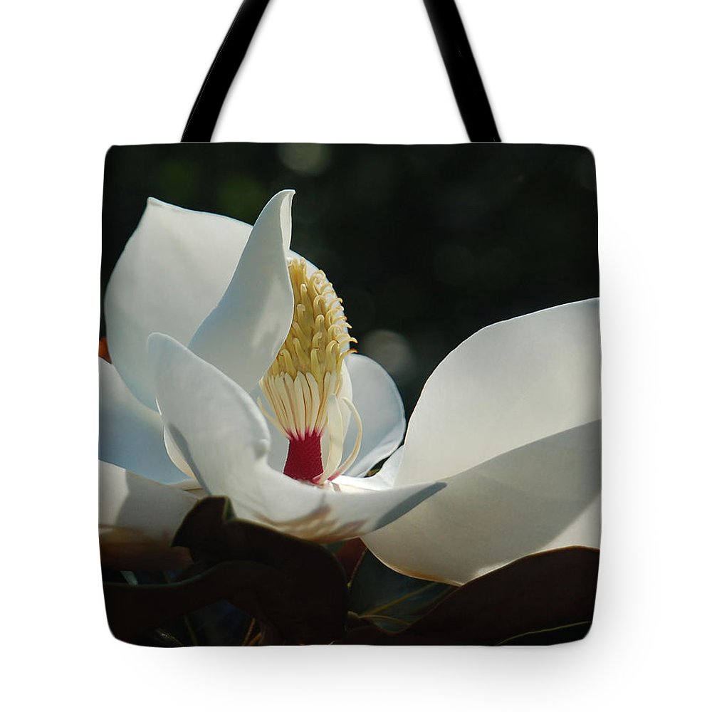 Magnolia Tote Bag featuring the photograph Magnolia Tiny Gem by Suzanne Gaff