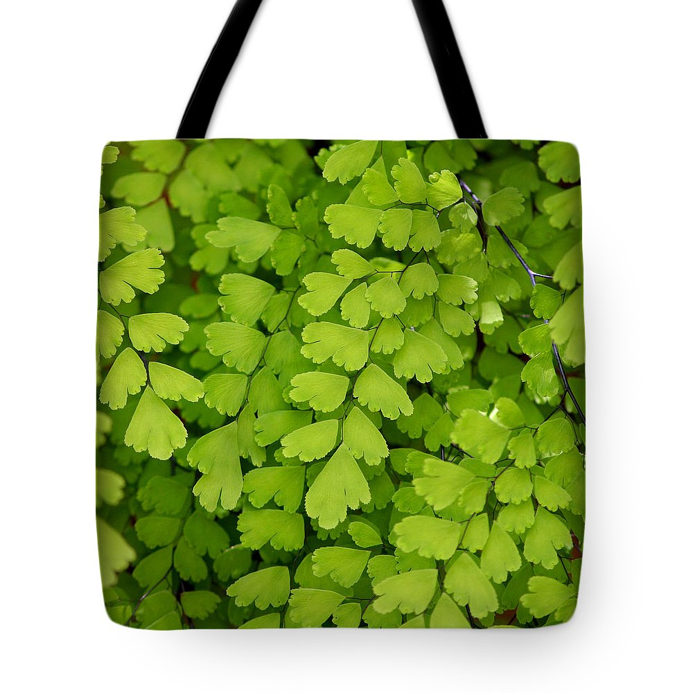 Fern Tote Bag featuring the photograph Maidenhair Fern by Art Block Collections