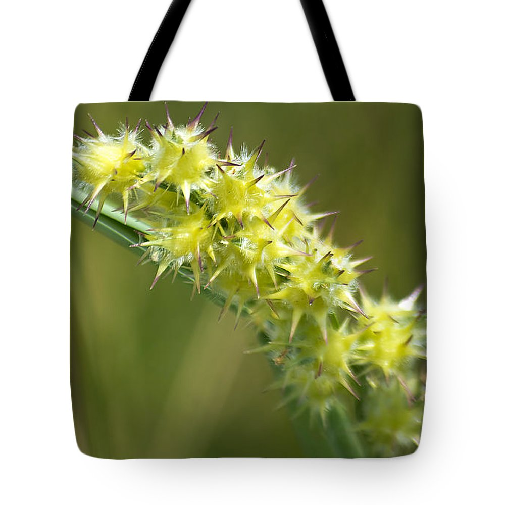 Nature Tote Bag featuring the photograph Main Point Of This Photograph by Kenneth Albin