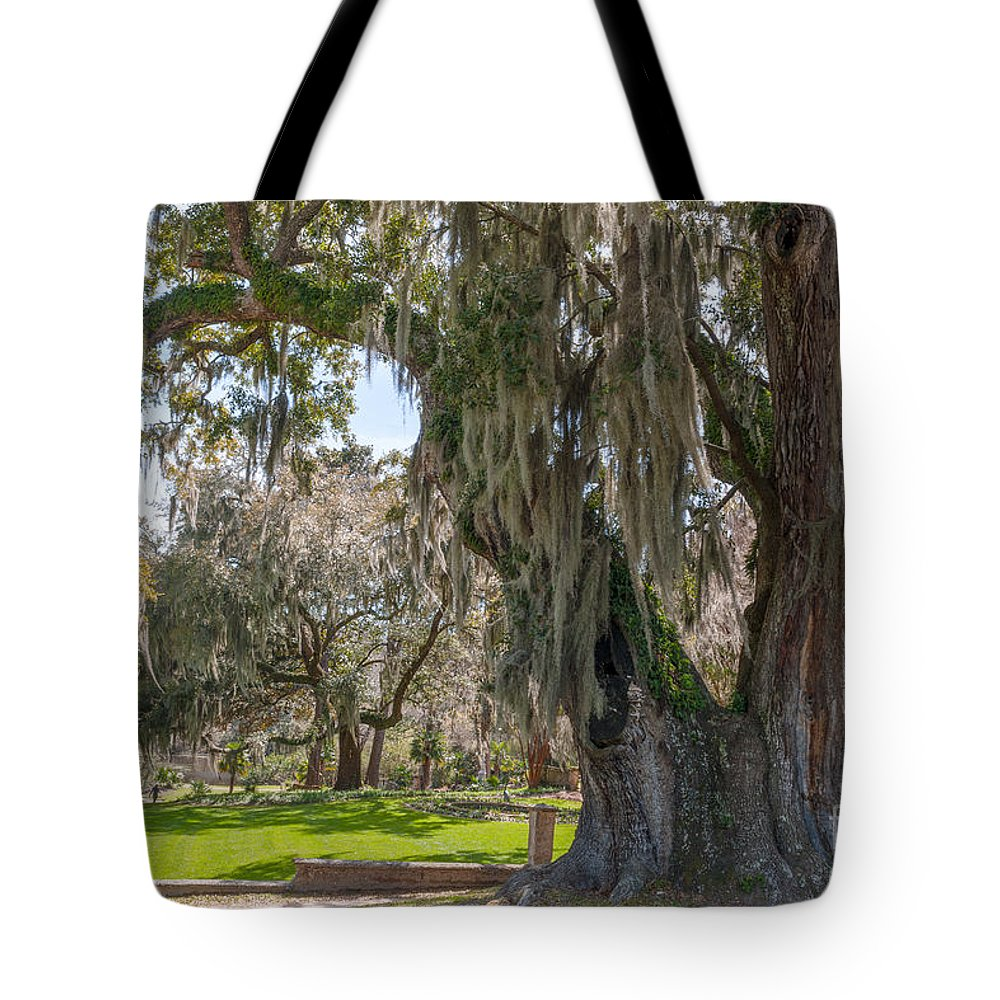 Majestic Live Oak Tree Tote Bag featuring the photograph Majestic Live Oak Tree by Dale Powell