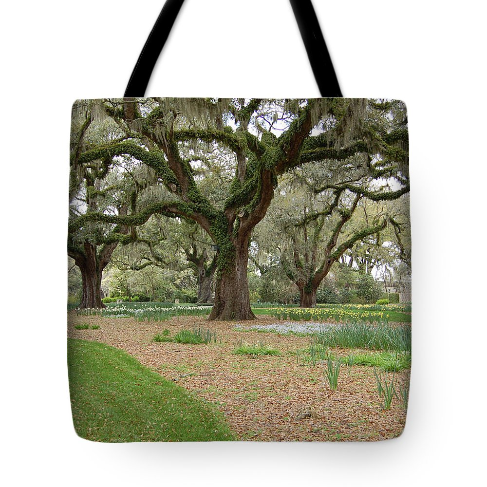 Live Oak Tote Bag featuring the photograph Majestic Live Oaks In Spring by Suzanne Gaff