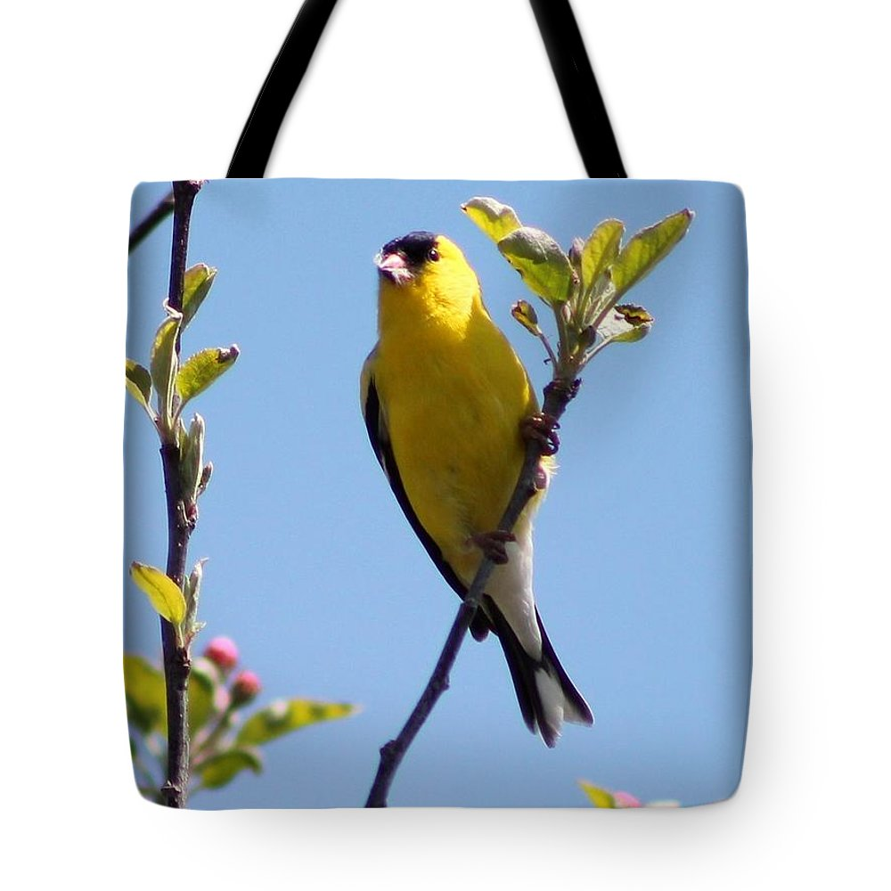 American Goldfinch Tote Bag featuring the photograph Male American Goldfinch Gathering Feathers For The Nest by J McCombie