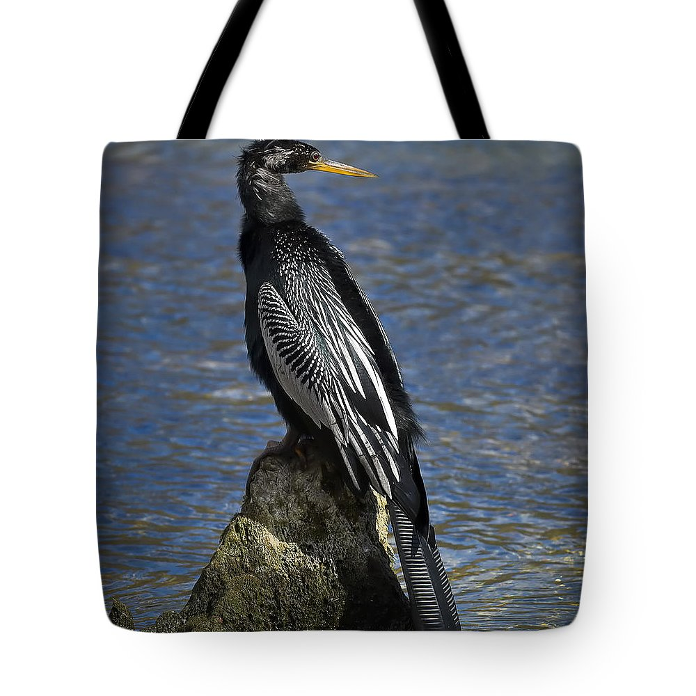 Florida Tote Bag featuring the photograph Male Anhinga by Bill Chambers