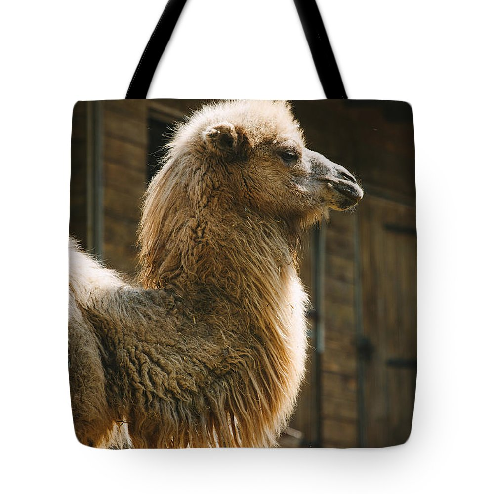 Africa Tote Bag featuring the photograph Male Camel Head by Pati Photography