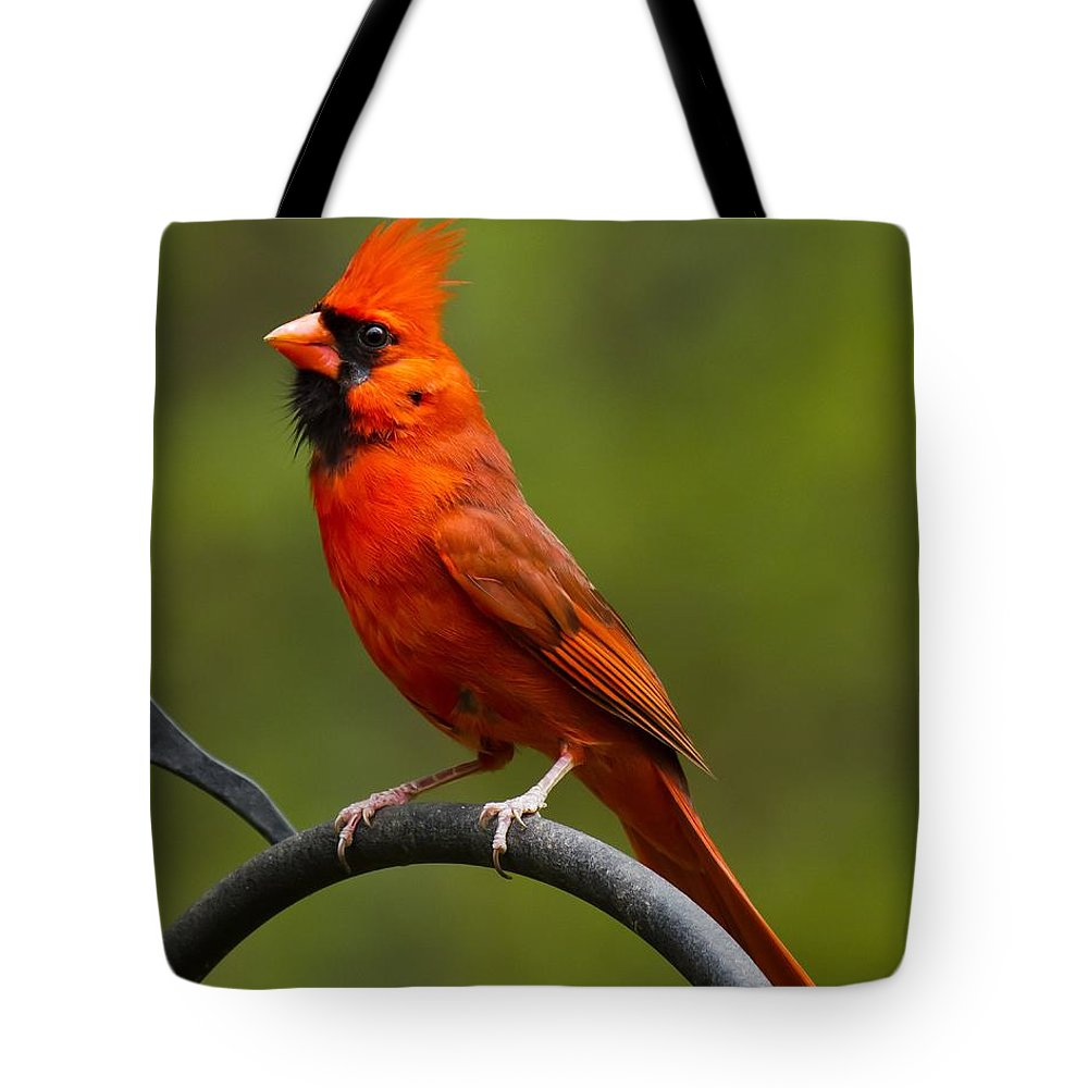 Male Cardinal Tote Bag featuring the photograph Male Cardinal by Robert L Jackson
