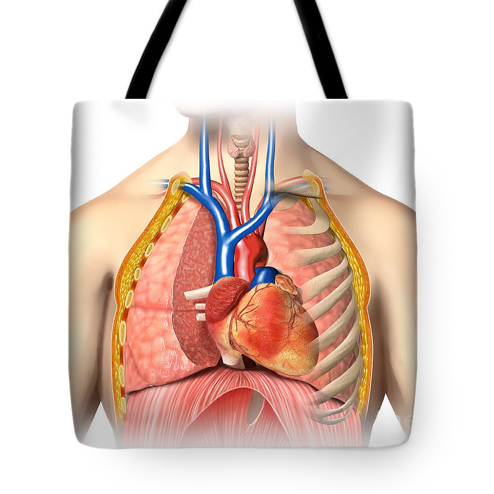 Male Chest Anatomy Of Thorax Tote Bag for Sale by Leonello Calvetti