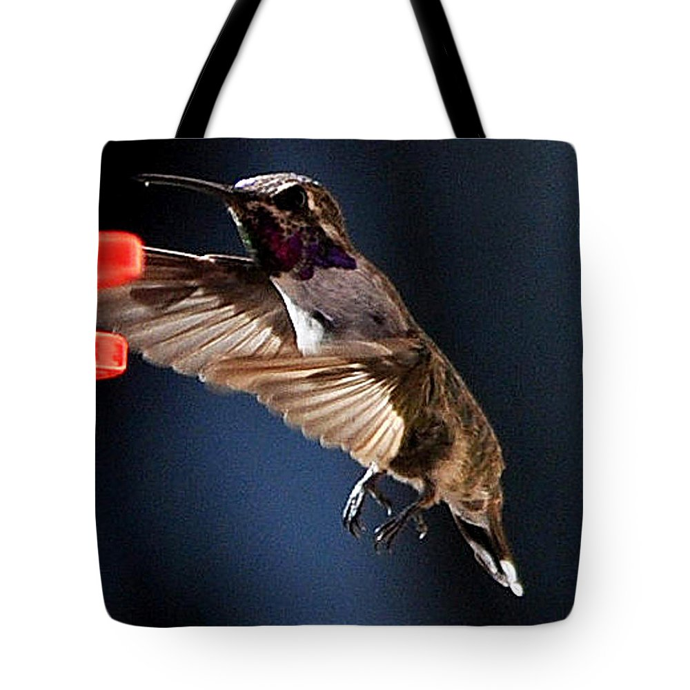 Annimals Tote Bag featuring the photograph Male Hummingbird Anna's Coming In Too Low by Jay Milo