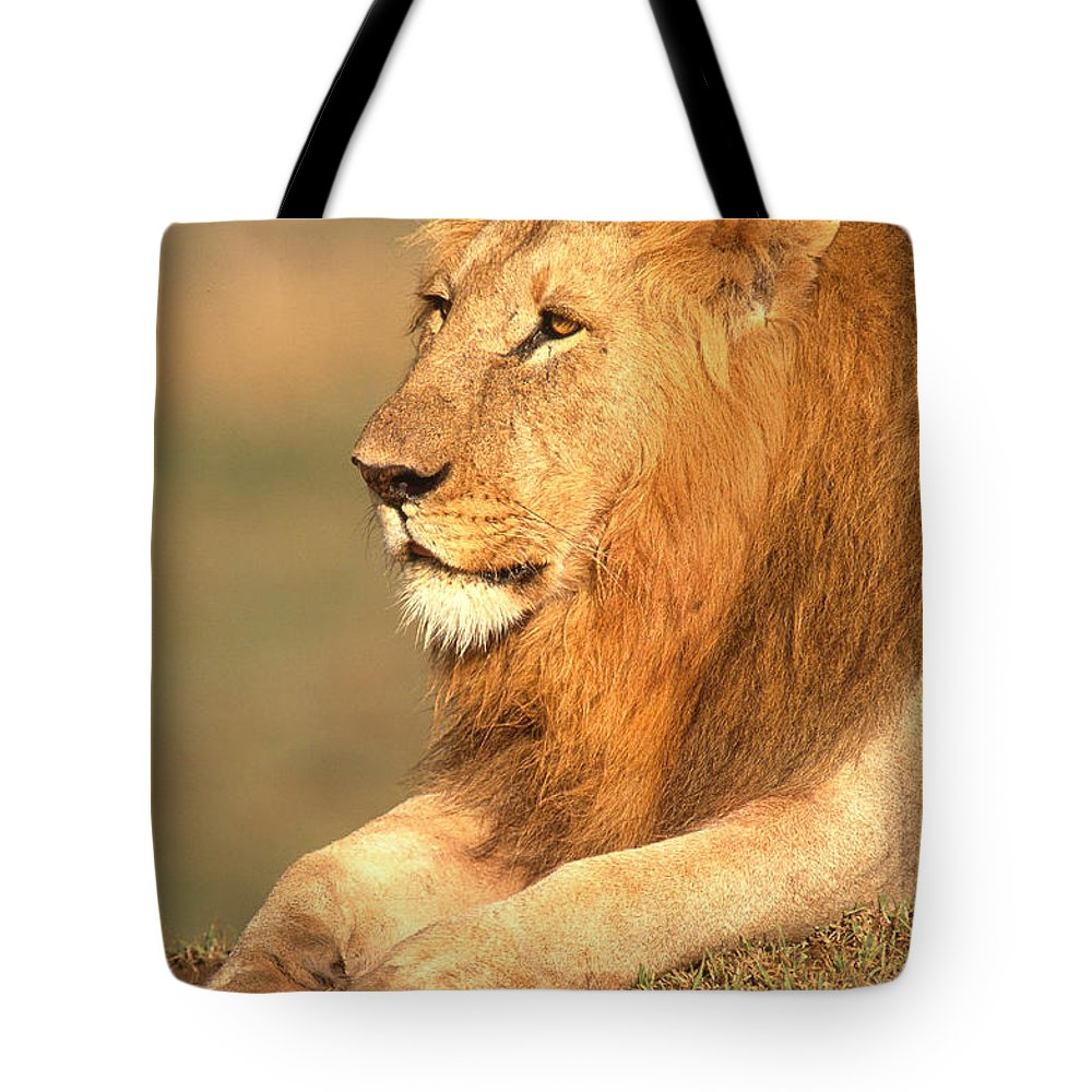 Lion Tote Bag featuring the photograph Male Lion by David Davis