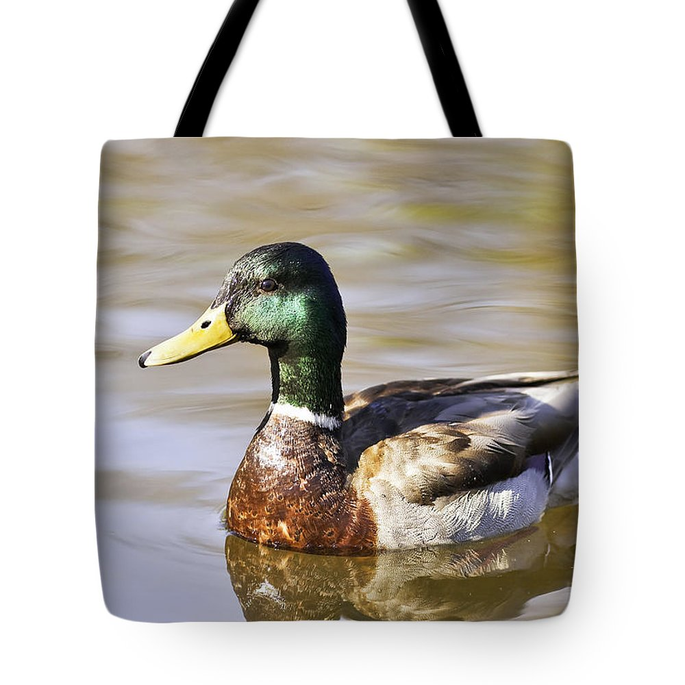 Light Tote Bag featuring the photograph Male Mallard Duck In Water, Assiniboine by Ken Gillespie