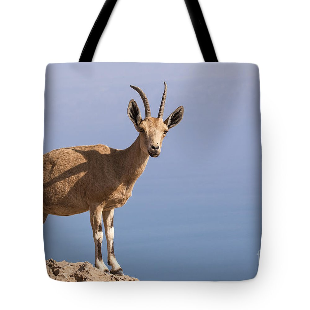 Ibex Tote Bag featuring the photograph Male Nubian Ibex 1 by Eyal Bartov