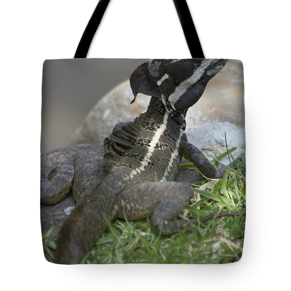 Basilisk Tote Bag featuring the photograph Male Striped Basilisk by Heiko Koehrer-Wagner
