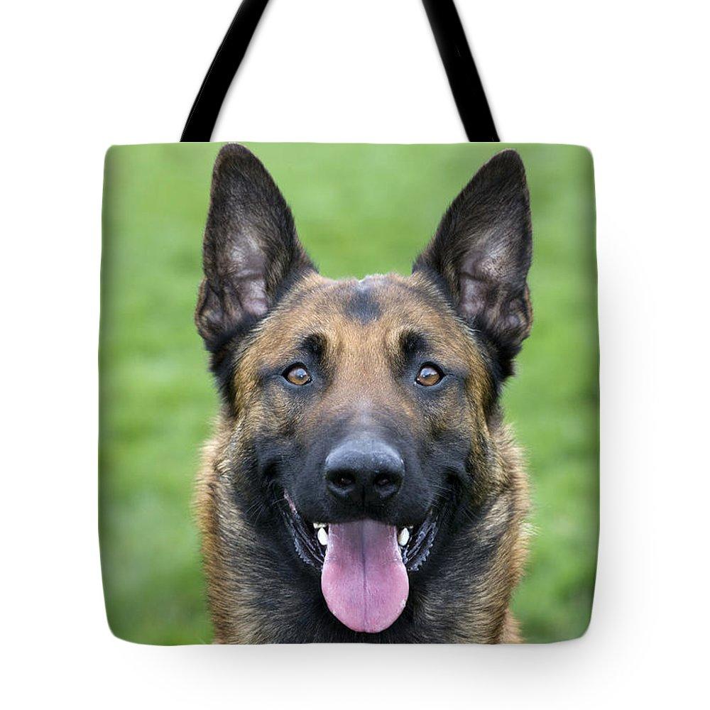 Malinois Tote Bag featuring the photograph Malinois, Belgian Shepherd Dog by Johan De Meester