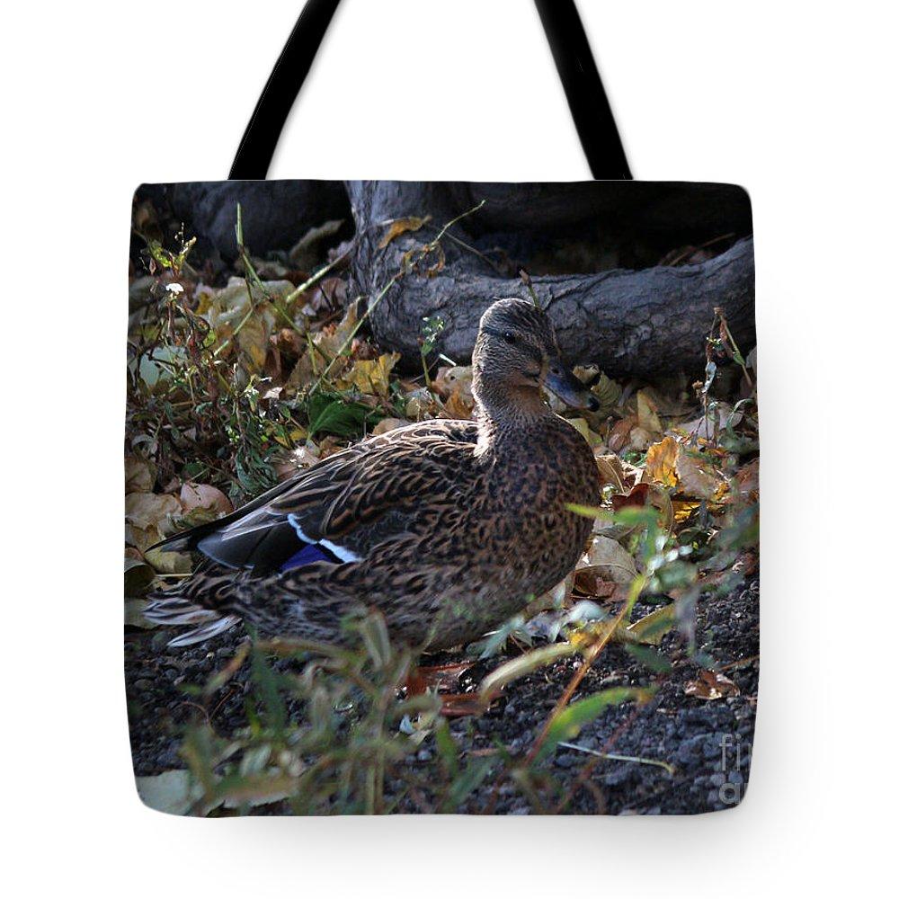 Mallards Tote Bag featuring the photograph Mallard In The Grass by Lori Tordsen