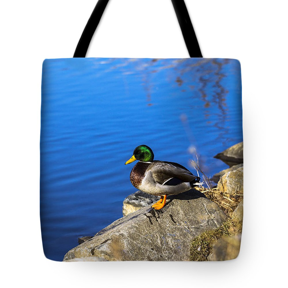 Duck Tote Bag featuring the photograph Mallard Looking Over His Domain by Jorge Perez - BlueBeardImagery