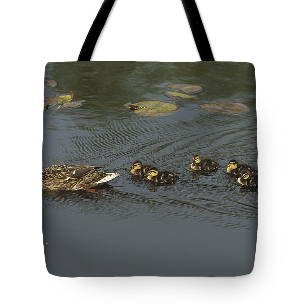 Anas Platyrhynchos Tote Bag featuring the photograph Mallard Mother With Ducklings by Konrad Wothe