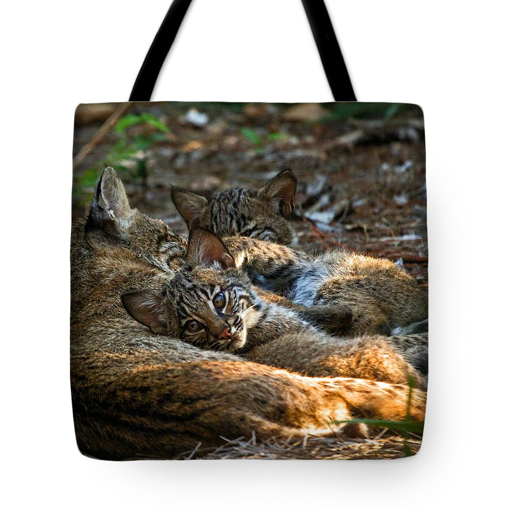 Bob Cat Tote Bag featuring the photograph Mama And Her Babies by Davids Digits