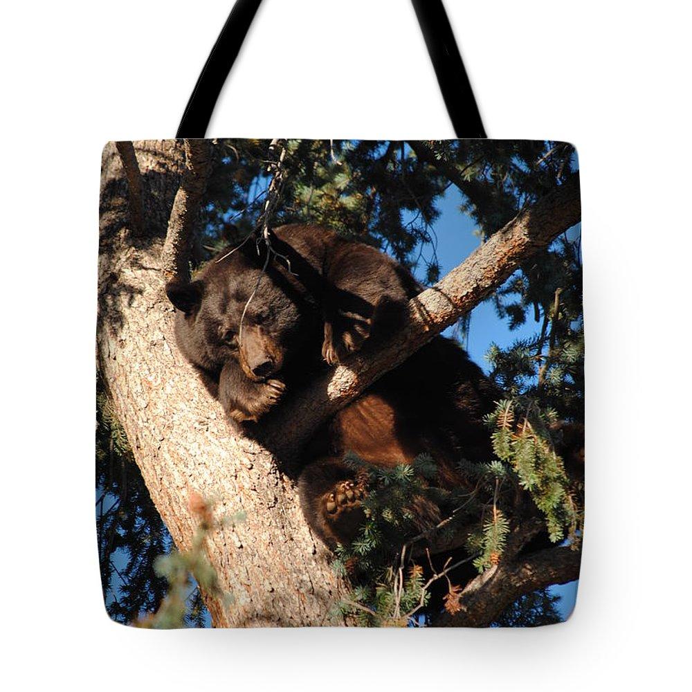 Bear; Mama Bear; Colorado; Wild; Wilderness; Wild; Animal; Wild Animal; Tree Tote Bag featuring the photograph Mama's In The Tree by Tammy Burgess