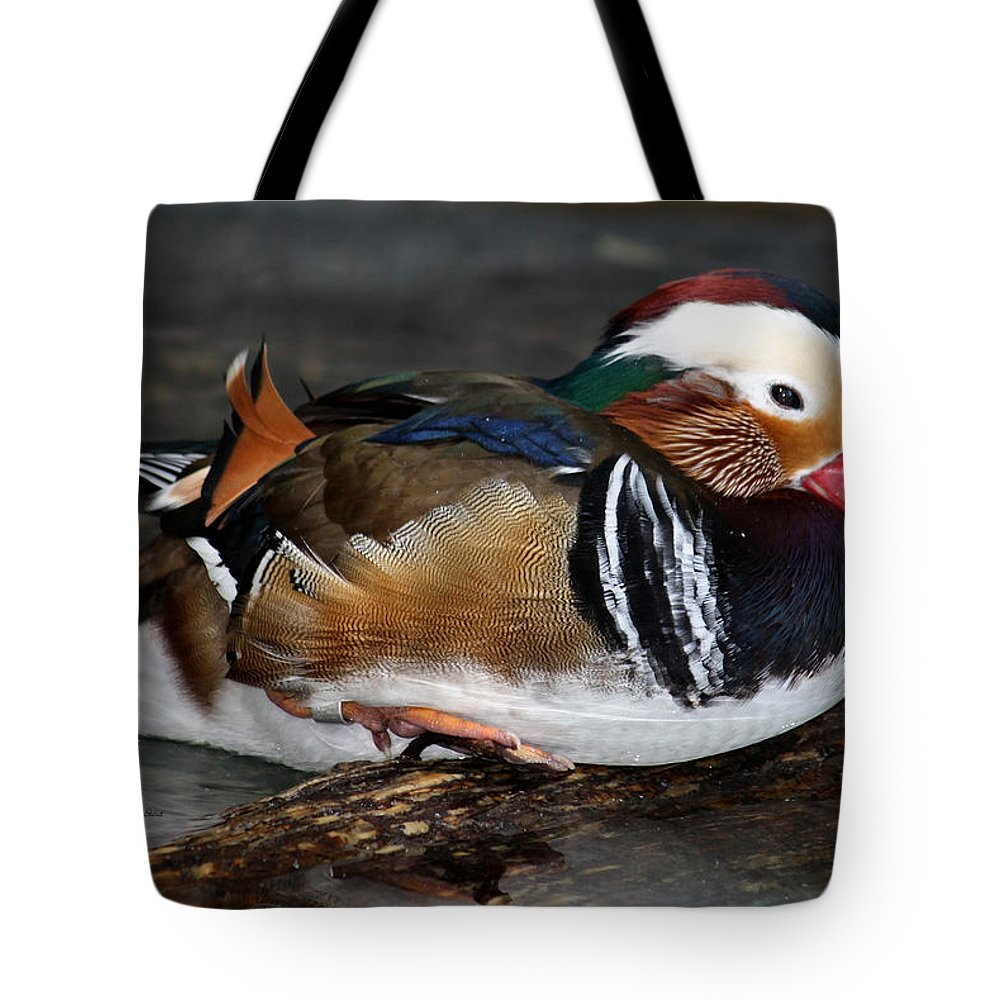 Designs Similar to Mandarin Duck by Suzanne Stout