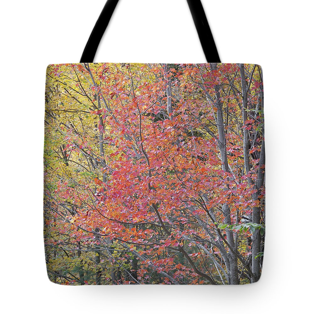 Fall Tote Bag featuring the photograph Maple Corner Foliage by Alan L Graham