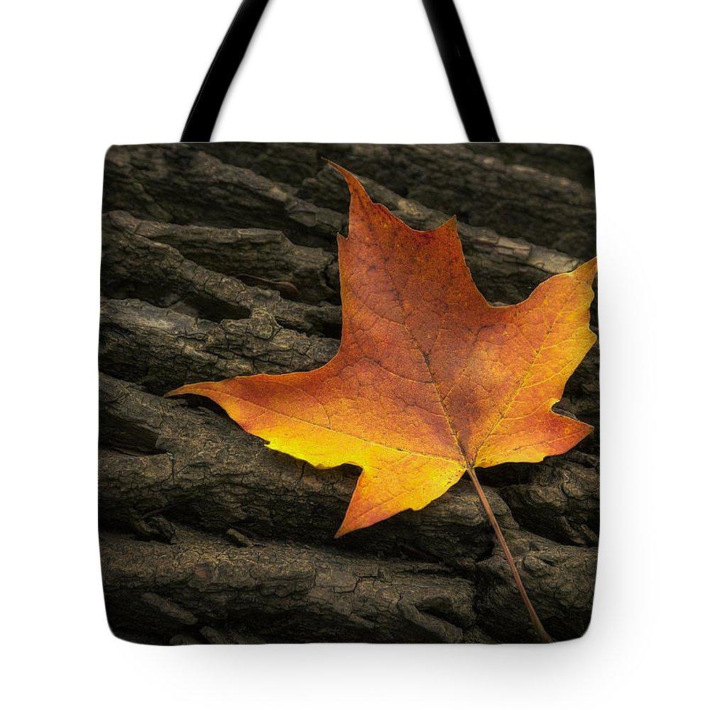 Tree Stump Tote Bags