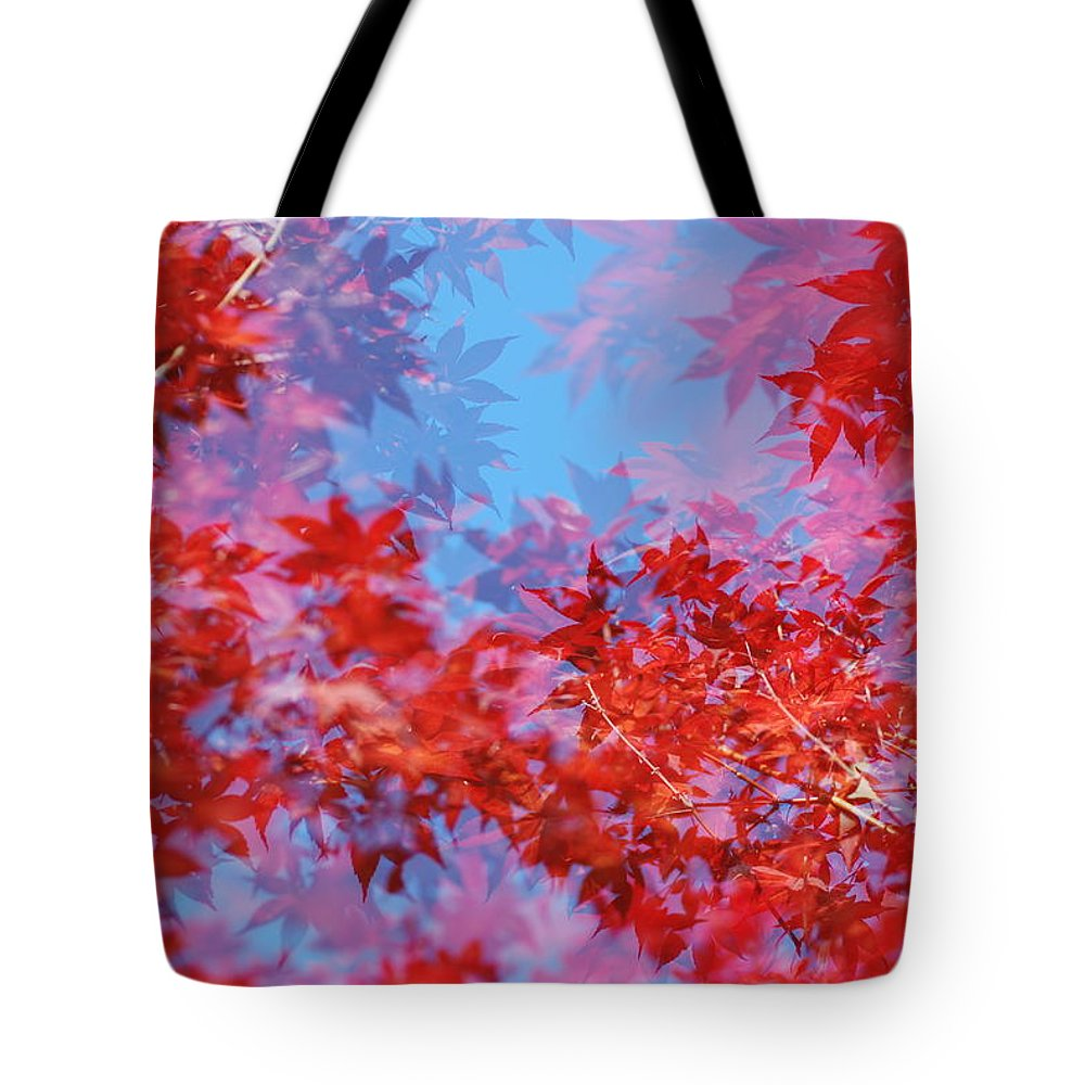 Leaf Tote Bag featuring the photograph Maple Leaves by Catherine Lau