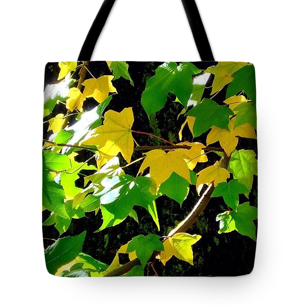 Maple Leaves In Sunlight Tote Bag featuring the photograph Maple Leaves In Sunlight by Anna Porter