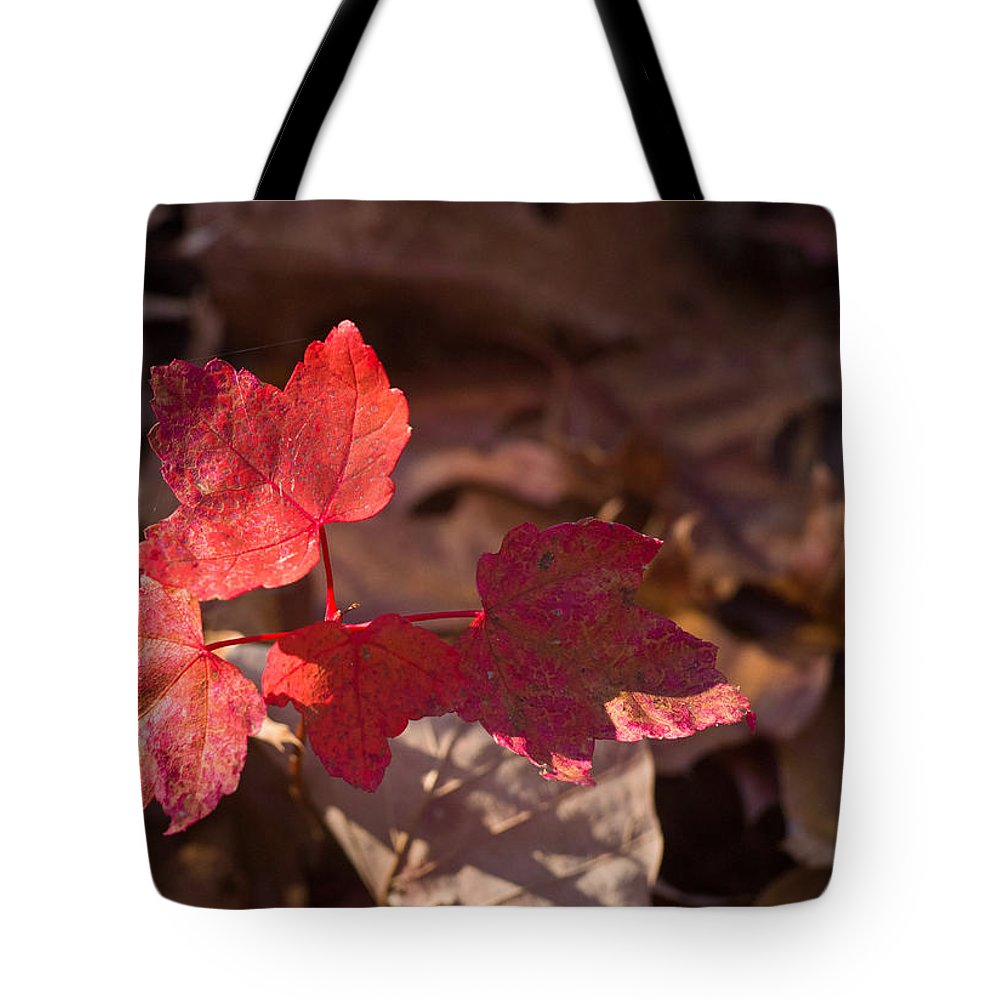 Maple Tote Bag featuring the photograph Maple Morning by Douglas Barnett