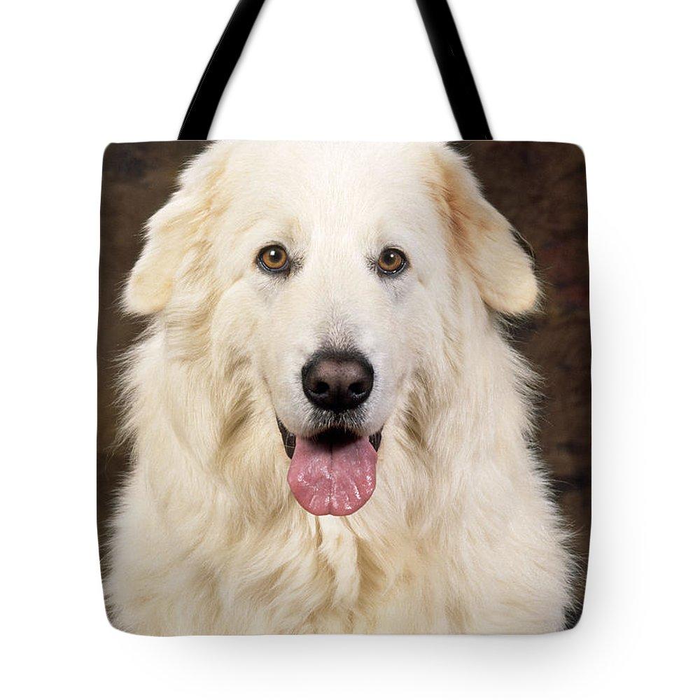 Maremma Tote Bag featuring the photograph Maremma Sheepdog by John Daniels