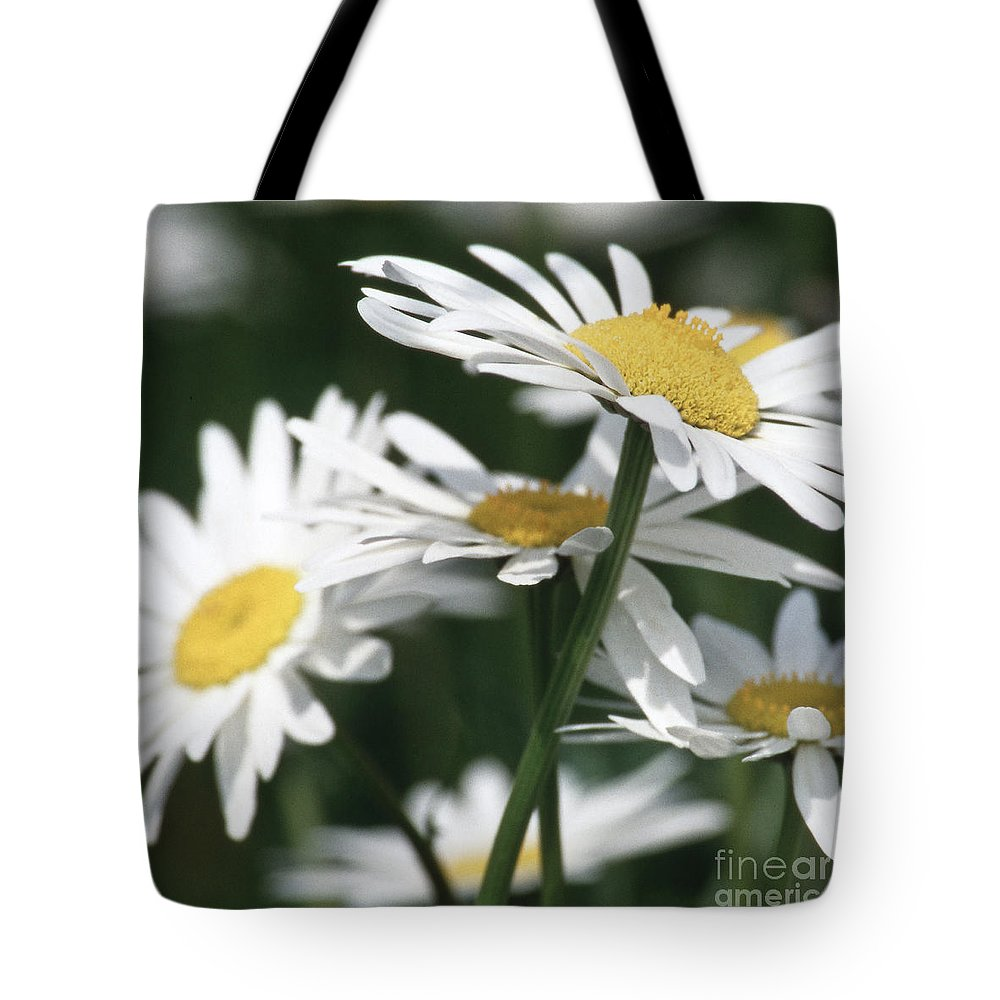 Heiko Tote Bag featuring the photograph Marguerite Blossom by Heiko Koehrer-Wagner
