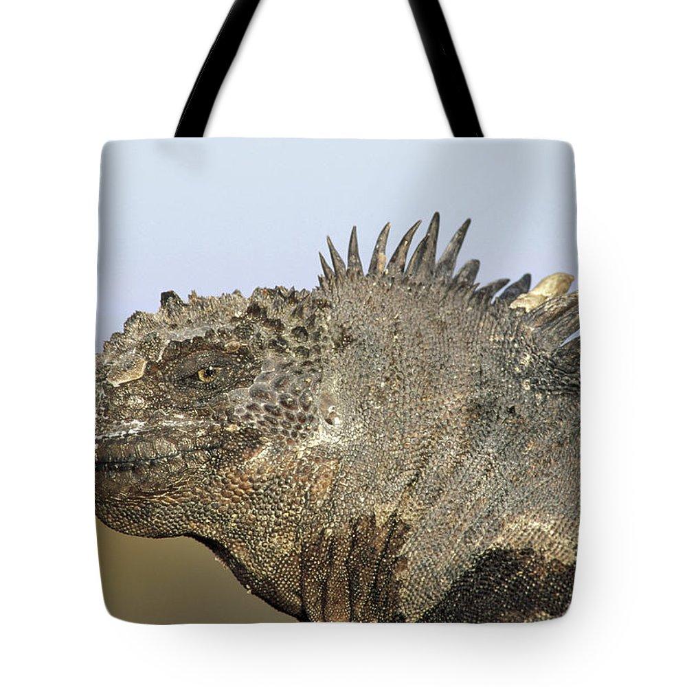 Feb0514 Tote Bag featuring the photograph Marine Iguana Male Santa Cruz Island by Tui De Roy