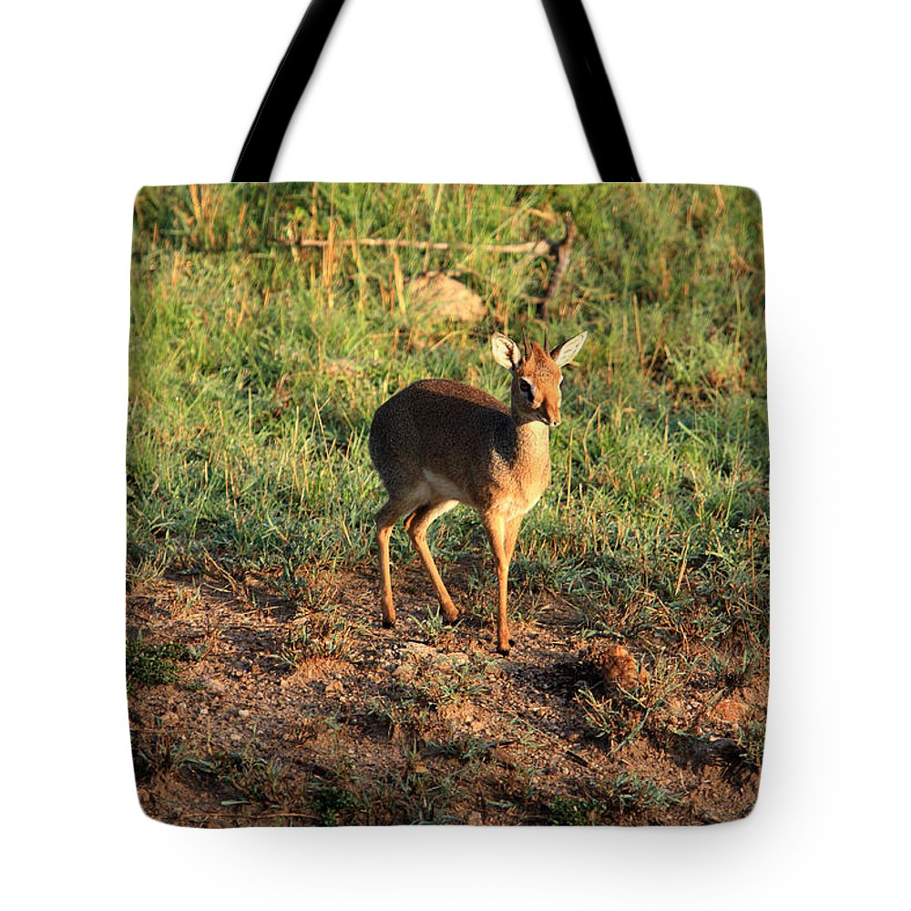 Africa Tote Bag featuring the photograph Masai Mara Dikdik Deer by Aidan Moran