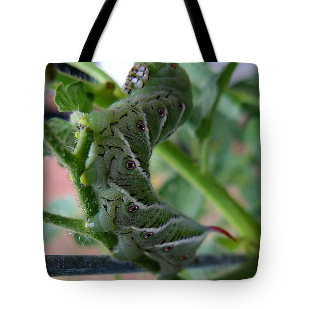Tomato Bug Tote Bag featuring the photograph 'mater Bug by Dan McCafferty
