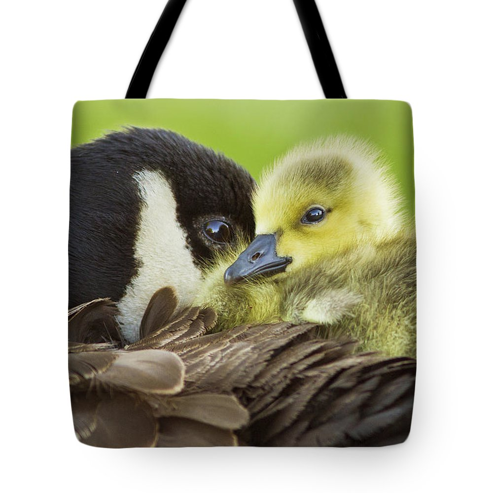 Maternal Tote Bag featuring the photograph Maternal Love by Mircea Costina Photography